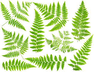 100 mpx Images set leaves fern isolated on white background in m
