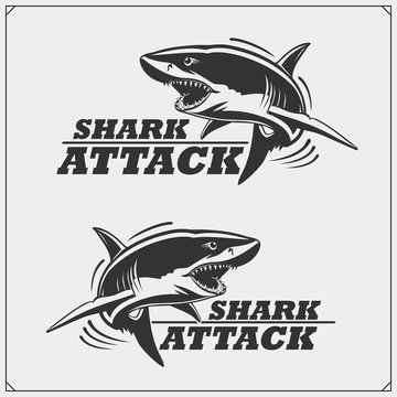 The emblem with shark for a sport team.