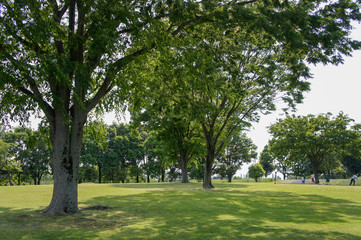 公園風景木の緑生い茂る景色は美しくみんなを笑顔にする