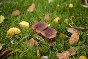 Mushrooms in the fall