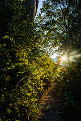 sunlight flare with leaves and bushes