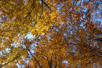 Photo low angle view of autumn bright sunny sky through sun-illu
