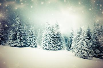 snowy winter landscape