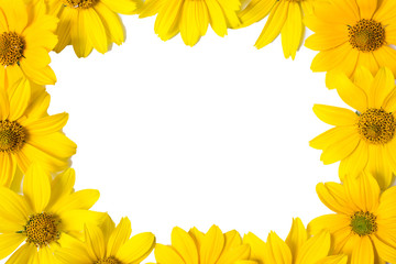 Frame of yellow flowers isolated on white background. Vivid yellow summer flowers. Place for design