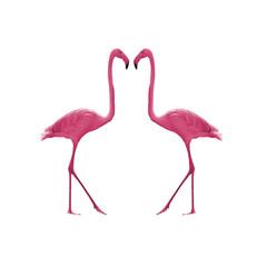 Bird flamingo isolated on white background ,Beautiful bird flamingo , flamingo in lovely moment