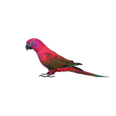 Colorful of  Parrot, sun Conure , yellow parrot , small parrot isolated on white background