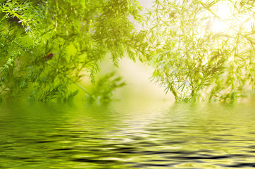 Natural defocused and depth of field (DOF) effect of green leaf, the bokeh effect, morning sunlight and water reflection