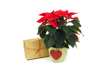 red poinsettia and gift box