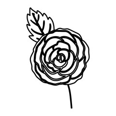 Rose flower icon. Decoration rustic garden floral nature plant and spring theme. Isolated design. Vector illustration