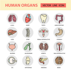 Modern color thin line icons on a theme medicine human internal organs.