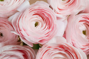 layered petals like a peony, gradient. beautiful bouquet buttercup close-up. colorful pink air color.