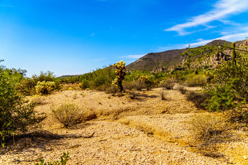 Black Mountain and the Desert Landscape with Cholla Cactus and other Cacti at the Boulders in the desert near Carefree, Arizona