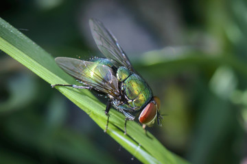 close up of a green fly on a stem