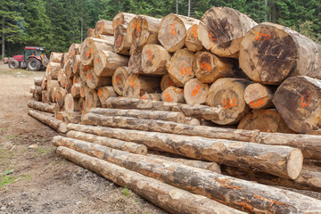 exploitation forestière dans le centre de la France, grumes empilées
