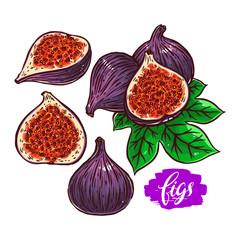 set of ripe figs