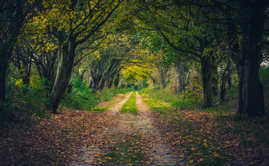 Woodland path through trees in autumn