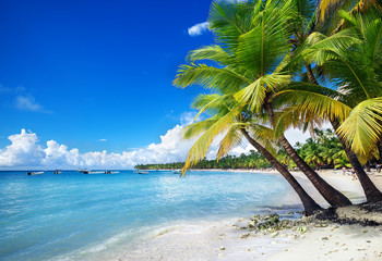 beach on Saona Island in the Caribbean