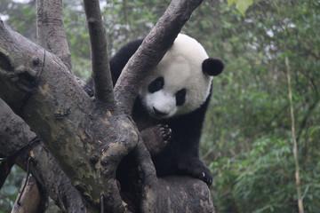 Autocollant pour porte Panda Baby Panda