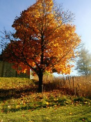 Tree in fall colors