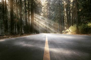 Straße durch Wald