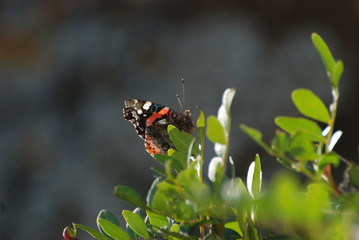 Fauna isola di Sardegna