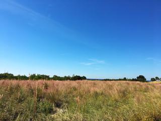 Park overlooking Tampa Bay