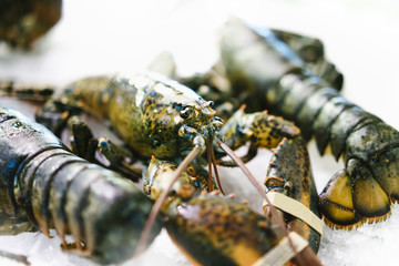 Isolated lobster on ice background on the market, closeup of fresh crustacean products in restaurant, useful shellfish sea food, group frozen seafood, ocean gourmet nutrition on kitchen