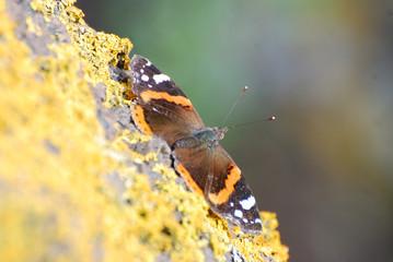 Fotografie di fauna nell'isola della Sardegna, scatti di insetti e farfalle sotto un caldo sol