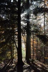Jeu de lumières automnales dans la forêt du Mont d'Hermone
