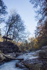Wild river in autumn forest