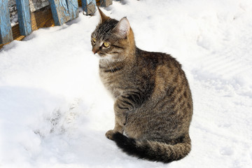 Cat in winter snow.