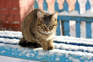 The cat in the winter on the bench.