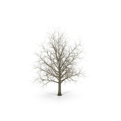 Winter maple tree isolated on white. 3D illustration