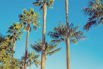 palm trees in Los Angeles in vintage tone