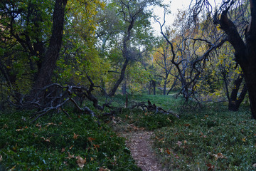 Sedona In The Fall