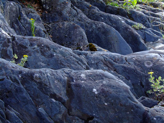 black rocks with small plants