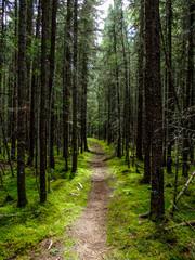 well worn hiking path through alpine forest
