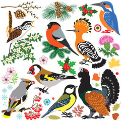 set of European  wild birds