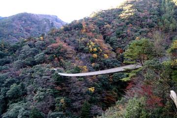 全国的に知られた九州熊本県五家荘の紅葉と梅の木轟吊り橋