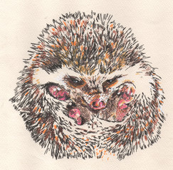Echidna baby drawing artistic, showing feet.