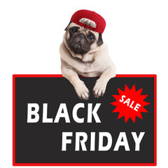 cute pug puppy dog hanging with paws on sign with text black friday, on white background