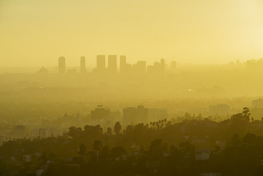 Los Angeles Westwood Sunset Cityscape from Griffith Park