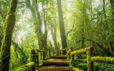 Rainforest in the mist, foggy rainforest background, mossy boardwalk in rainforest. Soft focus due to long exposure.
