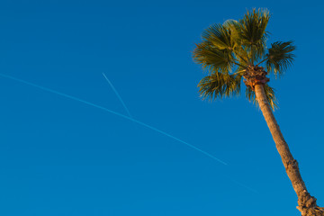 Palm tree in blue sky of Catalonia with traces of planes