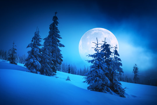 Moon rise in a winter forest
