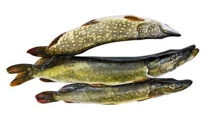 Three pike on a white background