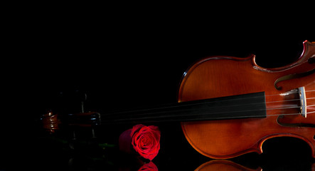 Violin and rose, Violin orchestra musical instruments