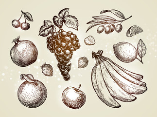 Hand drawn fruits. Sketch vector illustration