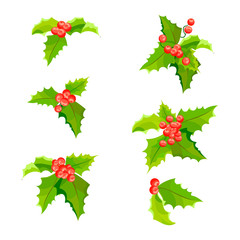 Mistletoe Christmas plants set with leaves and fruit. Holly berry decoration collection. Vector