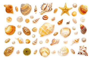 composition of exotic sea shells and starfish on a white background. top view